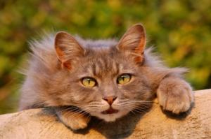 Arten und Funktionsweisen vom Katzenschreck Spray