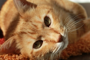 Fazit für den Einsatz von Katzenschreck Pflanzen