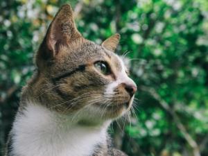 katzenschreck was hilft und funktioniert gegen katzen im garten