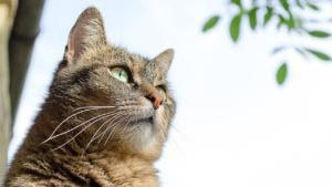 Was ist ein Katzenschreck Ultraschall