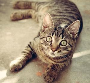 katzenschreck was hilft und funktioniert gegen katzen im garten. Black Bedroom Furniture Sets. Home Design Ideas