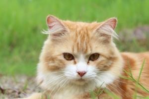 Wie genau funktioniert ein Katzenschreck Ultraschall-Gerät