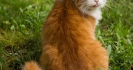 Katzenschreck - Katzensicherer Garten