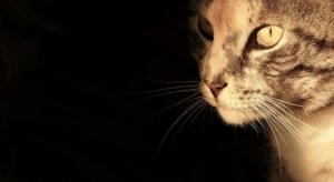 Katzenschutzverordnung