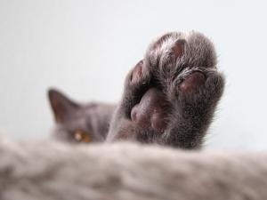Lassen sich frei lebende Katzen und Kater sozialisieren