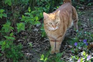 Warum ist die Katzenschutzverordnung so wichtig