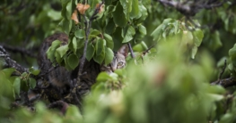 Jagd auf Katzen – dürfen Jäger das